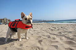 Calif., April 28, 2012 -- Betty lives in a coastal area and made sure a pet life jacket was included in her owners' emergency supply kit. FEMA photo - Photo by Carolyn Deming - Apr 27, 2012